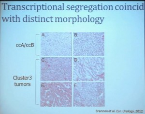 15 Transcriptional segregation coincides with distinct morphology